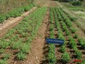 organic-vegetable-contract-farming-herbal-medicinal-plants-distributor-in-madhya-pradesh-chattisgarh-dwarkapati-agri-trade-pvt-ltd-small-3
