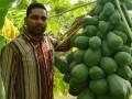 organic-vegetable-contract-farming-herbal-medicinal-plants-distributor-in-madhya-pradesh-chattisgarh-dwarkapati-agri-trade-pvt-ltd-small-6