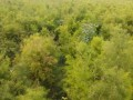organic-vegetable-contract-farming-herbal-medicinal-plants-distributor-in-madhya-pradesh-chattisgarh-dwarkapati-agri-trade-pvt-ltd-small-7