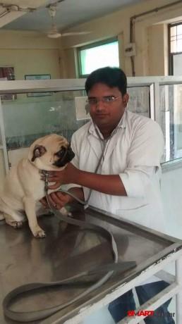 best-pet-care-center-in-jabalpur-best-dog-clinic-in-civil-line-jabalpur-pet-animal-doctor-in-jabalpur-big-0